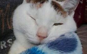 サンクスメール&きよせ猫耳の会会報