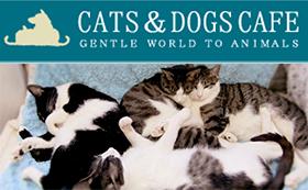 ◆CATS&DOGS CAFE(東京都墨田区の里親募集型猫カフェ)活動を応援!!