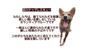 ◆石川ドックレスキュー(石川県ボランティアグループ) 活動を応援!!