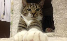 保護猫サロン優待券