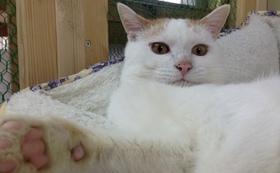保護猫サロン、プレオープンへのご招待