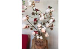 10,000円分の綿の木をプレゼント!