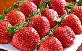 まぼろしのフルーツ4種・最優先お届けコース