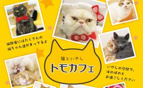 ◆トモカフェ(石川県金沢市猫カフェ) 1時間入場券2枚をGet!