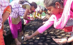 【植樹オーナーコース】アーシャ希望学校 植樹オーナー&栄養満点モリンガパウダー100g