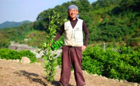 内海町の柑橘の木1本のオーナーになってください。