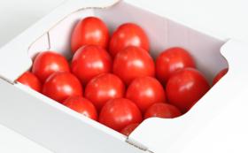 加熱用トマト(中箱)