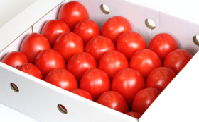 加熱用トマト(大箱)+ トマトハウス見学案内