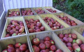 シードル飲み比べ+りんご定期配送