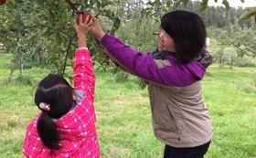 シードル飲み比べ+収穫体験
