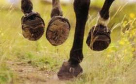 【幸せを招き入れる!馬のひづめの底に打ち付けつける蹄鉄(ていてつ)】