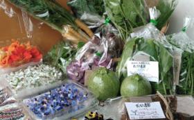 【土】ずくなし農園謹製 無肥無農薬 夏野菜セット