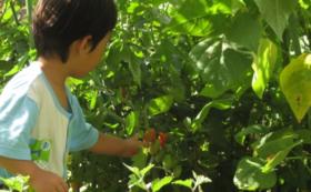 【体験付き】有機栽培米新潟コシヒカリ10kg&農場の恵み 配送3回パック