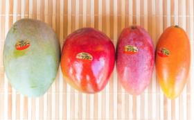 【幻のマンゴーが食べられる!】幻のマンゴー+アップルマンゴーお届けセット