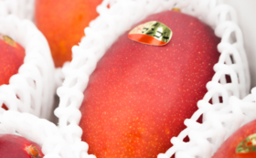 【幻のマンゴーが全種類食べられる!】マンゴー5種セット