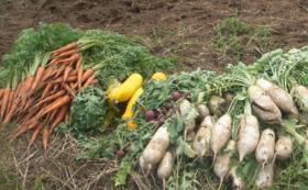 お野菜てんこ盛り!収穫体験コース
