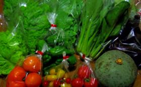 水耕野菜を味わってみる!(野菜詰め合わせ2か月分)