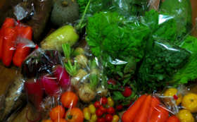 水耕野菜を存分に楽しむ!(野菜詰め合わせ6か月分)