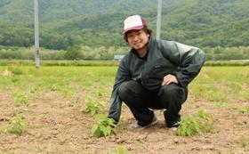 仁木町菊芋農園スポンサーコースB