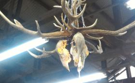 【渾身の一点物】オリジナル鹿頭骨ライト