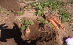 【未来農園さんの無農薬・無化学肥料のお野菜をお届けします!】