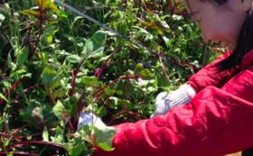 【未来農園さんの無農薬・無化学肥料のお野菜・人参ジュースをお届け!】