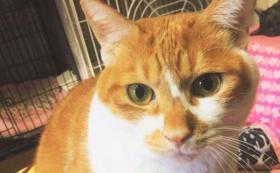 【3万円】犬猫が新しい家族と出会う場を守る!