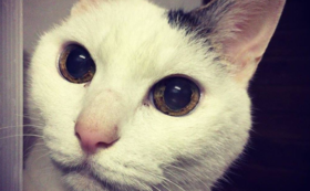 【10万円】犬猫が新しい家族と出会う場を守る!