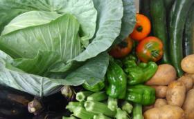 【お買物券・商品券付き】無添加味噌加工品3点+ 生味噌 + 季節の無農薬野菜セット(2回)