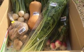 オーガニック野菜&漬物詰め合わせ