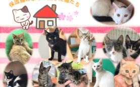 【わんにゃん感謝祭 ペアでご招待+保護猫カレンダー 2冊】