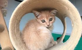 【10万円】保護猫を新しい家族につなぐ!