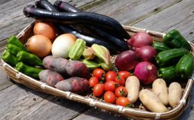 【おき農園で採れたミネラルたっぷりのお野菜『10品詰め合わせ』】
