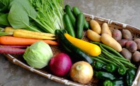 【サポーターとして直売所内にお名前を掲載!おき農園で採れたミネラルたっぷりのお野菜『10品詰め合わせ』を2回に分けてお届け】