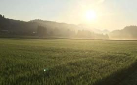 野菜収穫+フルコース料理体験