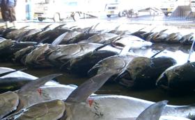 【Readyfor限定】年中お届け三陸良い物魚介類まつり【贅沢セット】