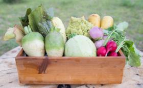 Agaratoのお野菜セット(ファミリーサイズ)