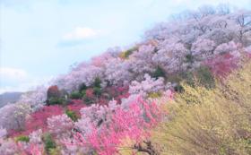 【学生の方限定】花見山盛り上げ隊として花想ひを応援!