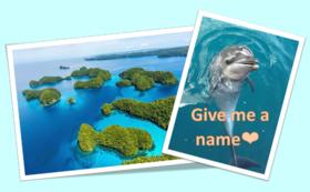 仔イルカ命名コンテスト応募資格 & イルカ・パラオの大自然フォトデータ