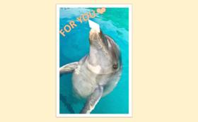 イルカがくわえて届ける!プチメッセージカード&ショートムービー