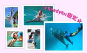 Readyfor支援者限定!1日イルカと遊ぶてんこ盛りプログラム券