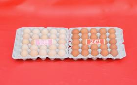 ワタナベファームの小春日和(2種類/各25個)