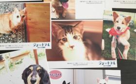オリジナル保護犬猫ポストカード