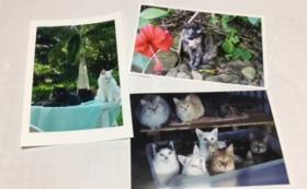 石垣島の猫たちのポストカード3枚セット