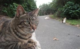 【石垣の猫たちを応援コース】