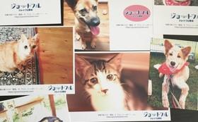 オリジナル保護犬猫ポストカードセット