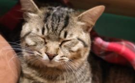 【リターン不要の方へ】保護犬猫を家族につなぐ!