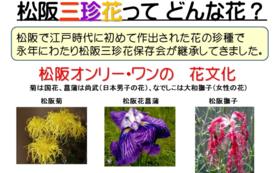 松阪三珍花 発祥の地めぐり