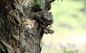 プロ撮影の可愛い猫たちの写真をメールでお届けします