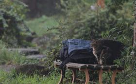 プロ撮影の可愛い猫の写真をデータとポストカードでお届けします